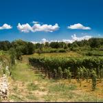 Vinogradi Marijanović